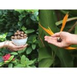 "Hand holding bowl of Vegan Molasses ""Cookie"" Date Balls on garden background"